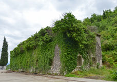 The ruined building. Overgrown with plants near the Godinje village at Montenegro Stock Image