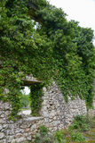 The ruined building. Overgrown with plants near the Godinje village at Montenegro Stock Images