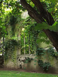 Ruined church arch. Beautiful church arch covered in ivy for wedding background Stock Images