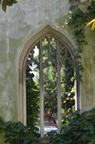 A ruined church, overgrown with vines. Details of a ruined church, overgrown with vines and plants. An old arched window is visible stock photos