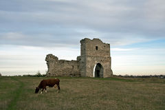 Ruined cossack gate and grazing cow. In the meadows Royalty Free Stock Photography
