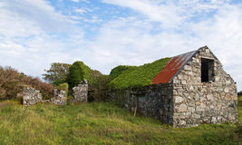 The Ruined Farmhouse. A ruined and overgrown farmhouse in Connemara, Galway in Ireland royalty free stock image