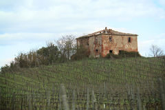 Ruined House and Vineyard Royalty Free Stock Image