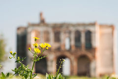 Ruined house walls and yellow flower Royalty Free Stock Photos
