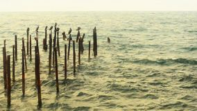 Ruined pier stock footage