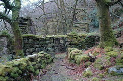 Ruined Stone Cottage. In winter woodland Stock Photo