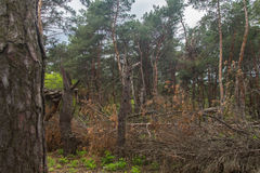 Ruined storm forest Royalty Free Stock Photography