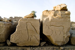 Ruined wall reliefs of Horus as a falcon and a bul Stock Image