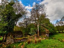 Ruins of Welsh Farm Homestead. Ruined Welsh farm homestead at Cae-garw in a picturesque valley near Cellan Ceredigion. The ruin is set in meadows and can be Stock Photos