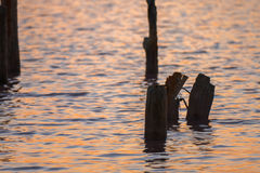 Ruined wooden pier on lake. At sunrise Stock Photos