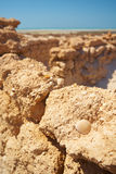 Ruinen in der Wüste Stockbilder