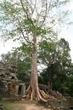 Ruinen des aincient Tempels und der riesigen Baumwurzeln Stockfoto