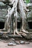 Ruinen des alten Tempels und der riesigen Baumwurzeln Stockfotografie