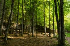 Ruinen des Berghof Lizenzfreie Stockbilder
