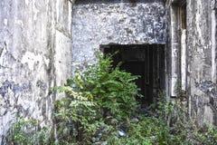Ruinen des schäbigen Gebäudes abgedeckt durch Vegetation stockbilder