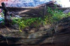 Ruinen des schäbigen Gebäudes abgedeckt durch Vegetation stockbild