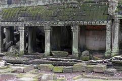 Ruinen des Tempels Ta-Prohm in Angkor/in Camobodia Stockbild