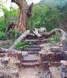 Ruinen des Treppenhauses im Wald - die blockierte Straße Stockbilder
