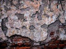 Ruinen mit gebrochenem Gips auf alter Backsteinmauer Lizenzfreies Stockfoto