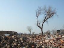 Ruinen und Baum Stockfoto