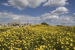 Ruinen und Feld Stockfotos