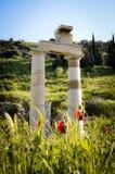 Ruinen und Mohnblumen im Grün von Ephesus Stockbild