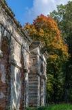 Ruinen von alten Gewächshäusern auf dem Hintergrund des Herbstwaldes Lizenzfreies Stockbild