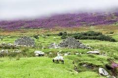 Ruines abandonnées de village sur l'île d'Achill Image libre de droits
