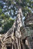 Ruines antiques de Ta Prohm photos stock