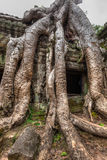 Ruines antiques et racines d'arbre, merci temple de Prohm, Angkor, Cambodge Photo stock