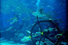 Ruines artificielles d'eau du fond avec des poissons nageant autour dans le grand aquarium Photo stock