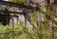 Ruines couvertes par vigne Photographie stock libre de droits