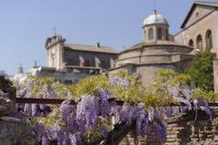 Ruines d'extérieur de fleurs de Rome antique, Italie photo libre de droits