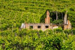 Ruines d'une vieille maison entre les vignobles image stock