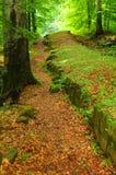 Ruines dans la forêt Photographie stock libre de droits