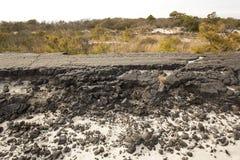 Ruines de émiettage de boulevard de Baltimore sur l'île d'Assateague, mars Photographie stock