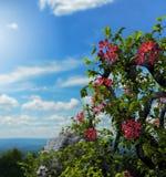 Ruines de fleurs de lierre sur une colline Images libres de droits