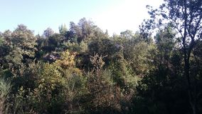 Ruines de fortification sur la côte près du Pula image stock