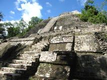 ruines de lamanai Photo stock