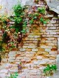 Ruines de mur Photo libre de droits