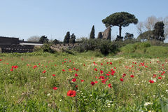 Ruines de Pompeii du pré de pavot photographie stock libre de droits