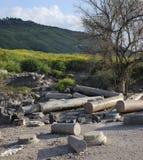 Ruines de Susita, Golan Heights, hippopotames, Israël Photographie stock