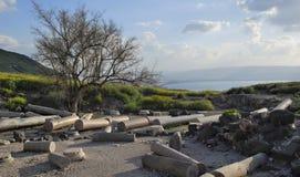 Ruines de Susita, mer de la Galilée, Golan Heights, hippopotames Photos stock