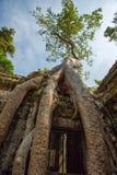 Ruines de temple de Prohm de ventres photos libres de droits