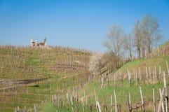 Ruines del cortijo en paisaje de los viñedos de la primavera de Prosecco Fotos de archivo