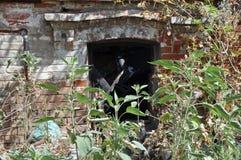 Ruines du feu avec l'herbe Photo stock