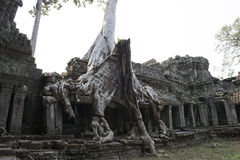 Ruines et temples d'Angkor Vat Siem Reap, Cambodge Images stock
