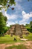 Ruines maya à Belize Photo stock