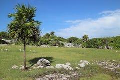 Ruines maya Photo libre de droits
