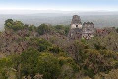 Ruines maya dans la jungle Tikal Photographie stock libre de droits